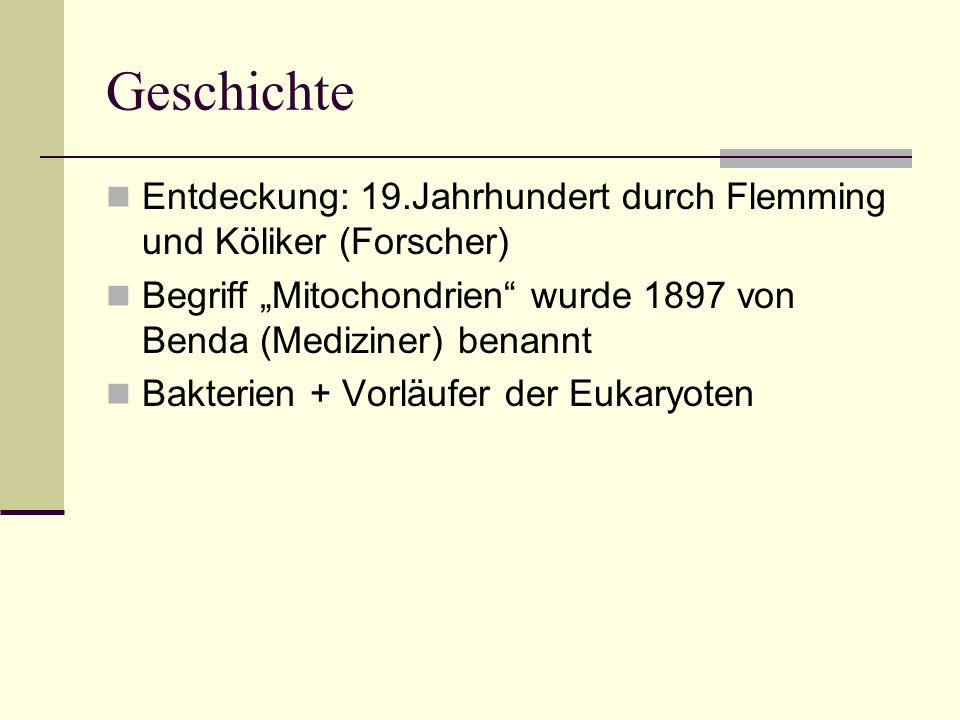 """Geschichte Entdeckung: 19.Jahrhundert durch Flemming und Köliker (Forscher) Begriff """"Mitochondrien wurde 1897 von Benda (Mediziner) benannt."""