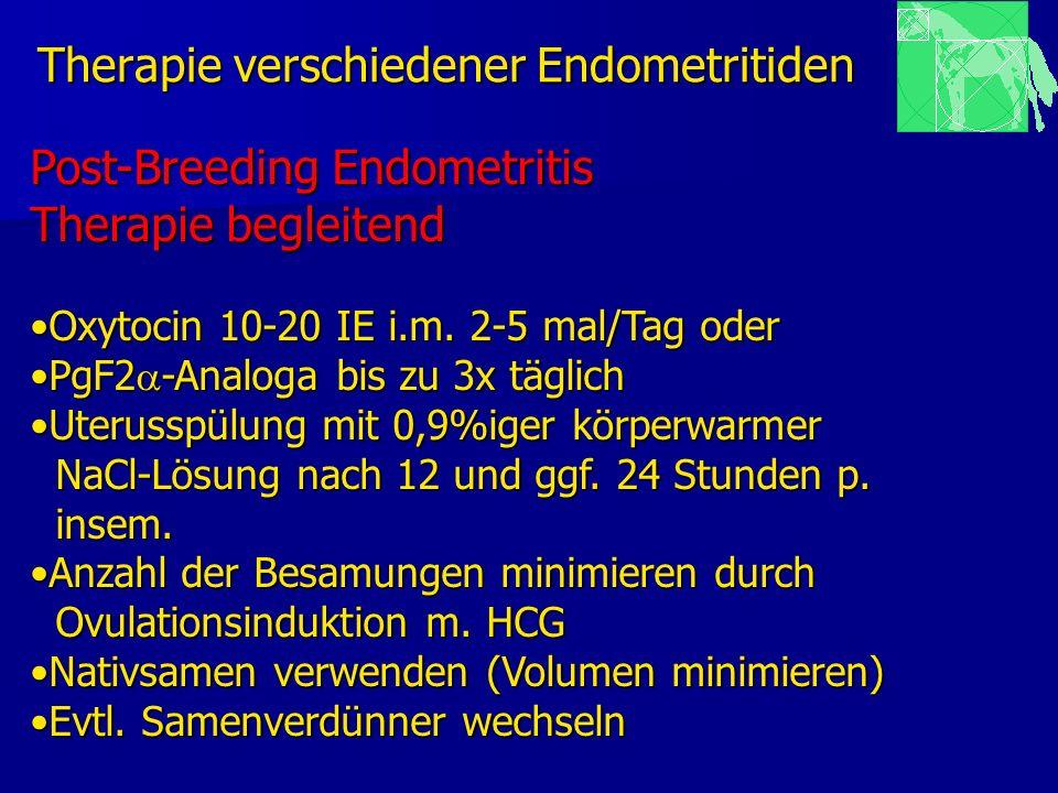 Therapie verschiedener Endometritiden