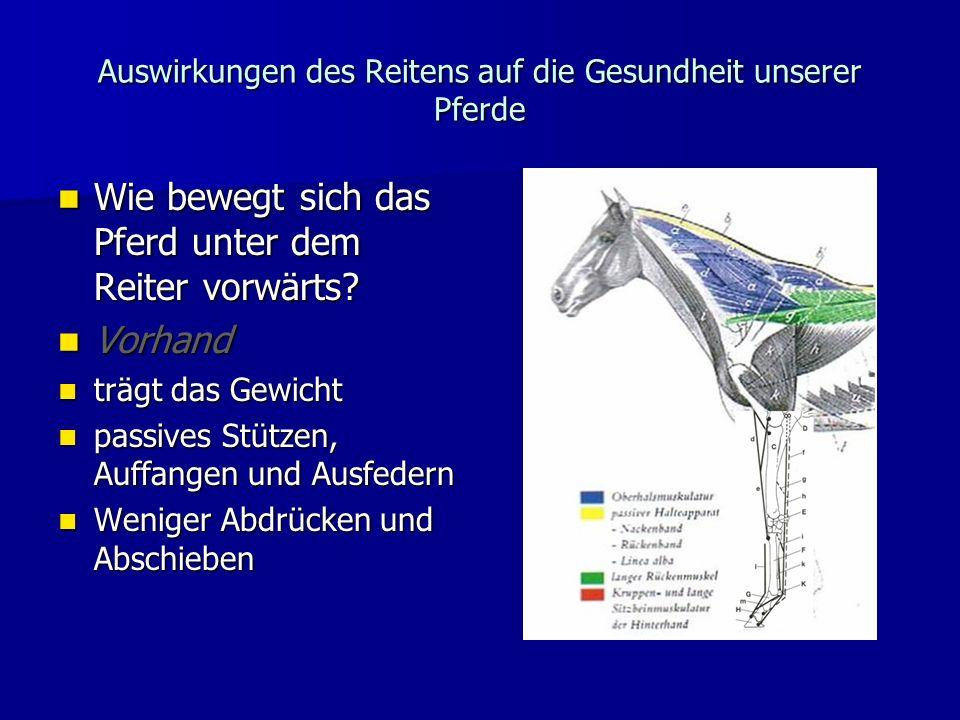 Auswirkungen des Reitens auf die Gesundheit unserer Pferde
