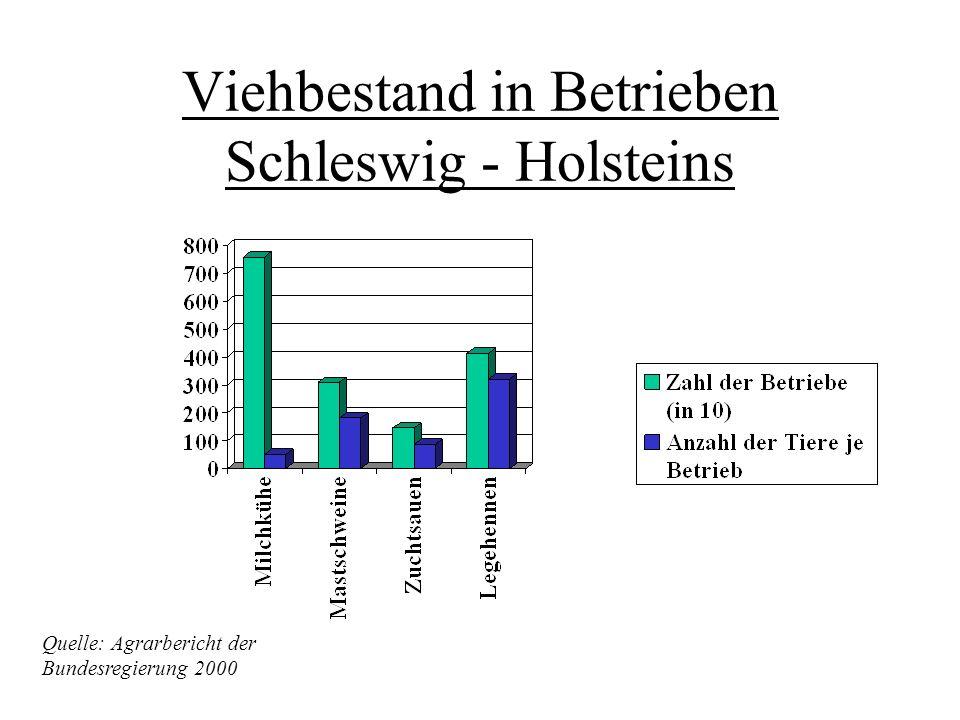 Viehbestand in Betrieben Schleswig - Holsteins