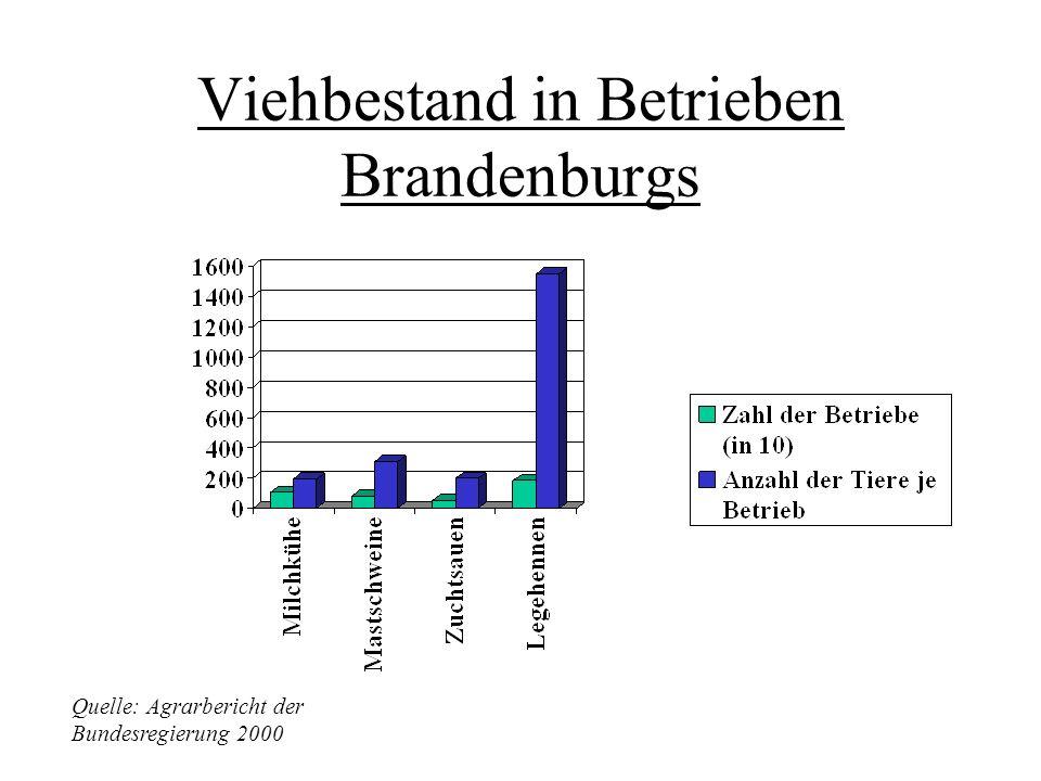 Viehbestand in Betrieben Brandenburgs