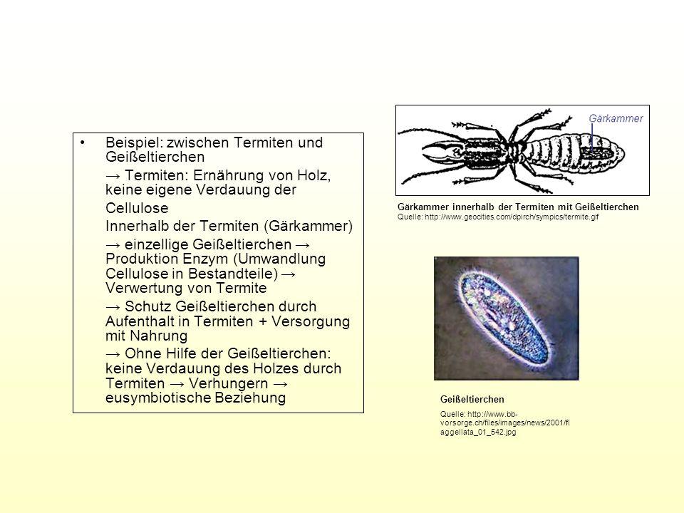 Beispiel: zwischen Termiten und Geißeltierchen