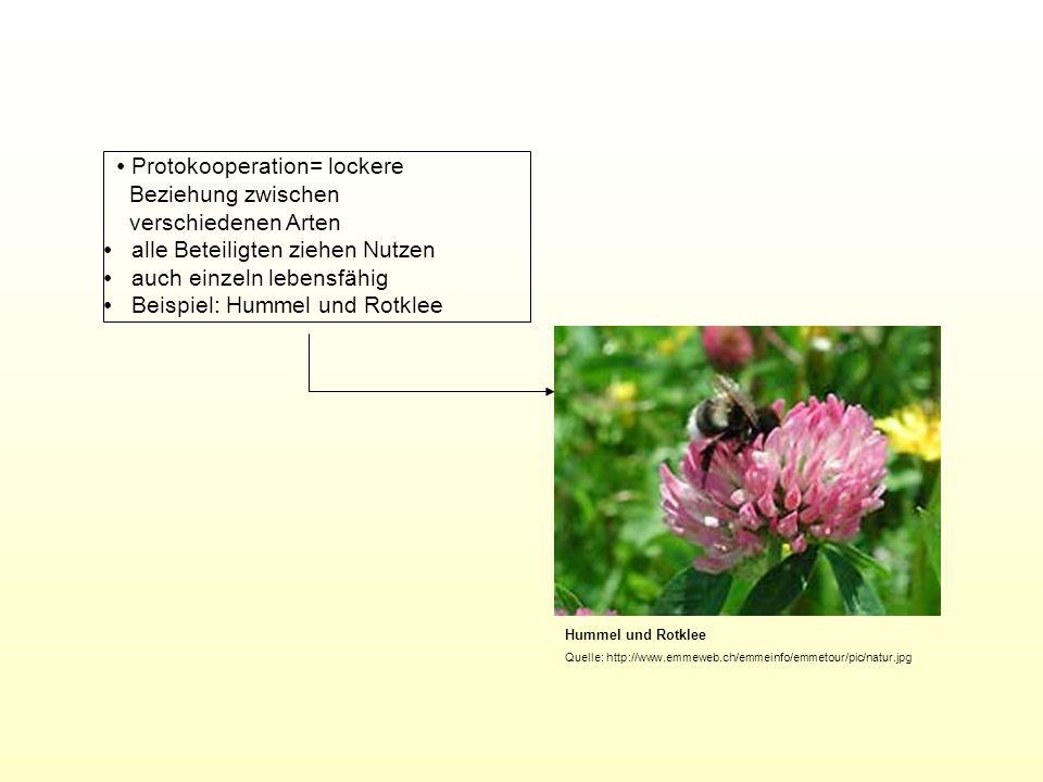 ∙ Protokooperation= lockere Beziehung zwischen verschiedenen Arten
