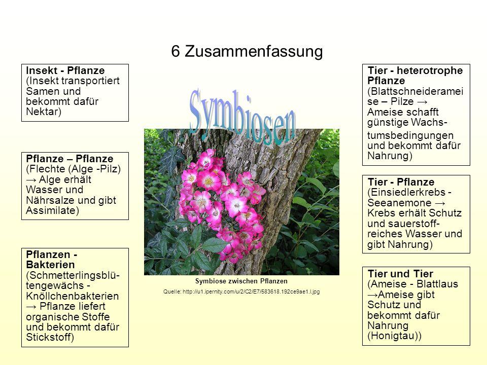 Symbiose zwischen Pflanzen