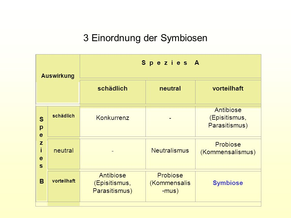 3 Einordnung der Symbiosen