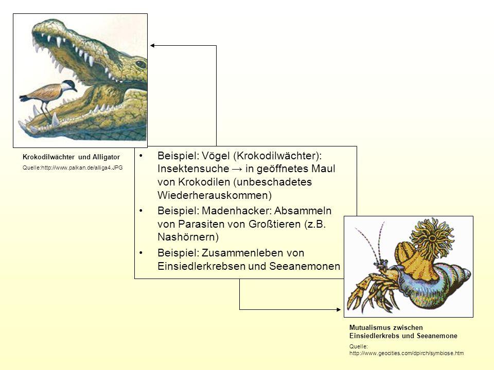Beispiel: Zusammenleben von Einsiedlerkrebsen und Seeanemonen