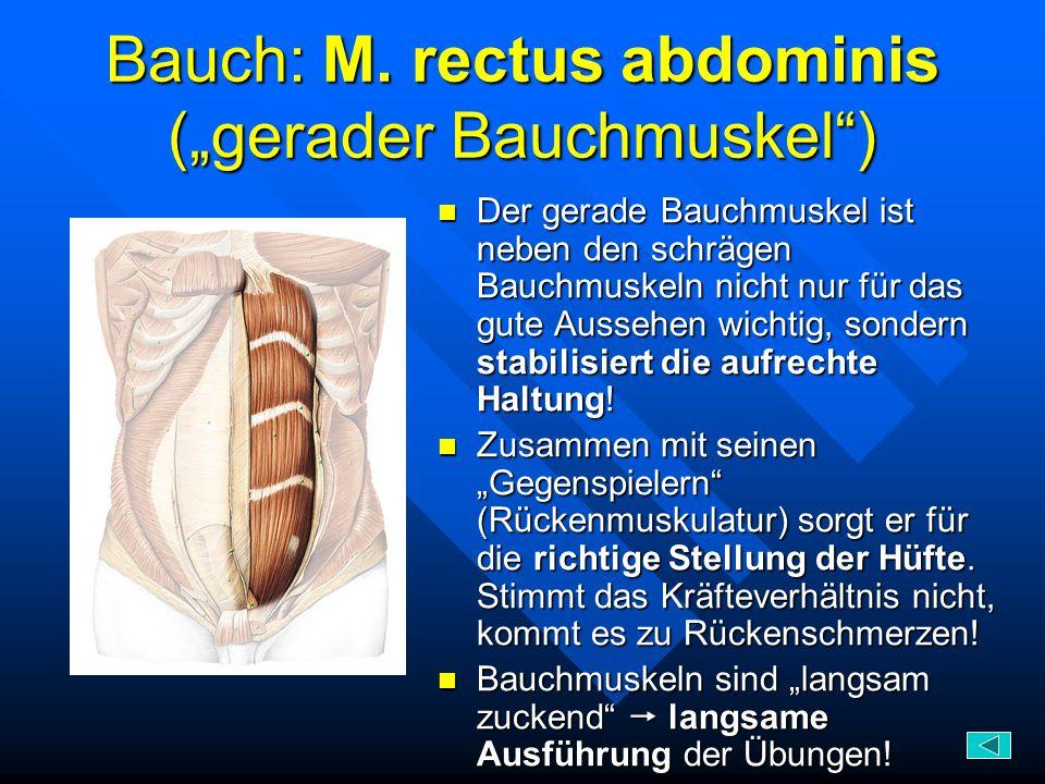 "Bauch: M. rectus abdominis (""gerader Bauchmuskel )"