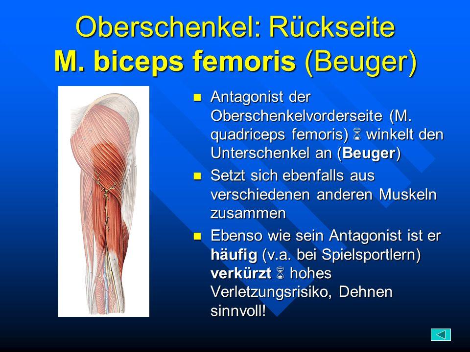 Oberschenkel: Rückseite M. biceps femoris (Beuger)