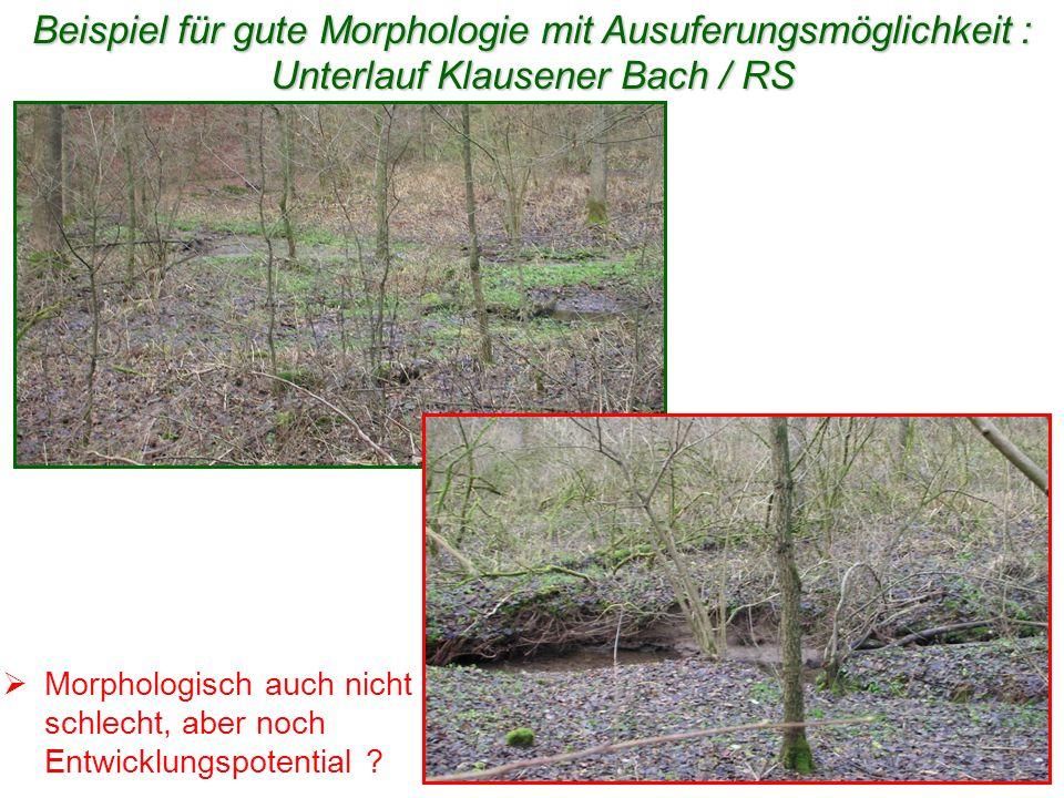 Beispiel für gute Morphologie mit Ausuferungsmöglichkeit : Unterlauf Klausener Bach / RS