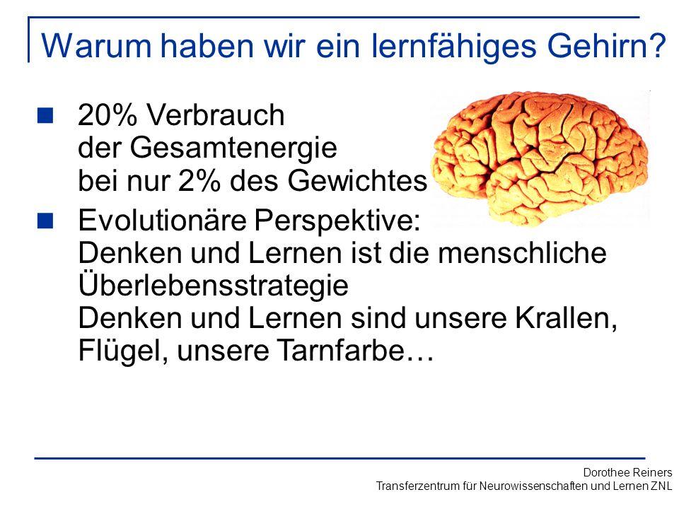 Warum haben wir ein lernfähiges Gehirn