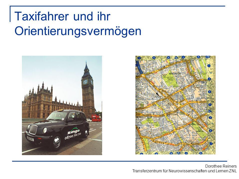 Taxifahrer und ihr Orientierungsvermögen