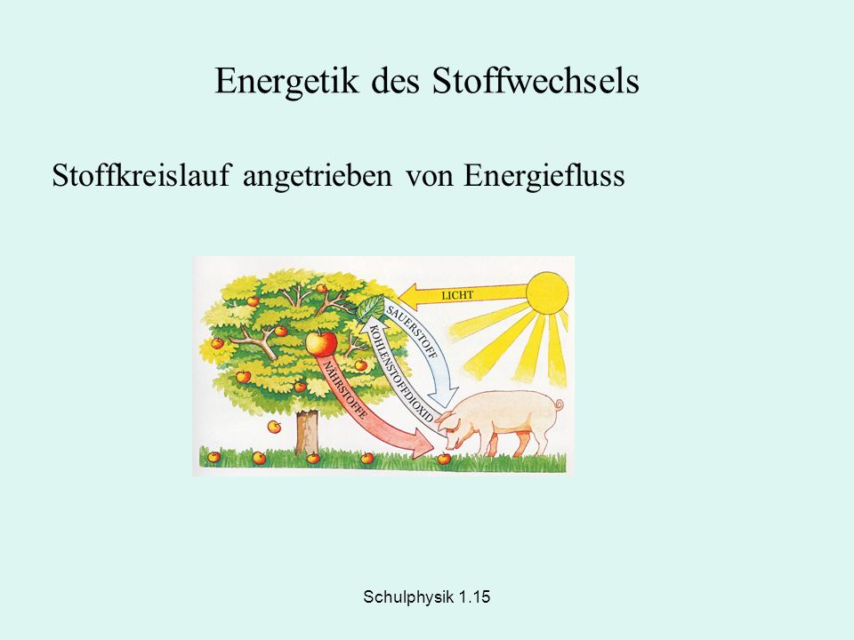 Energetik des Stoffwechsels