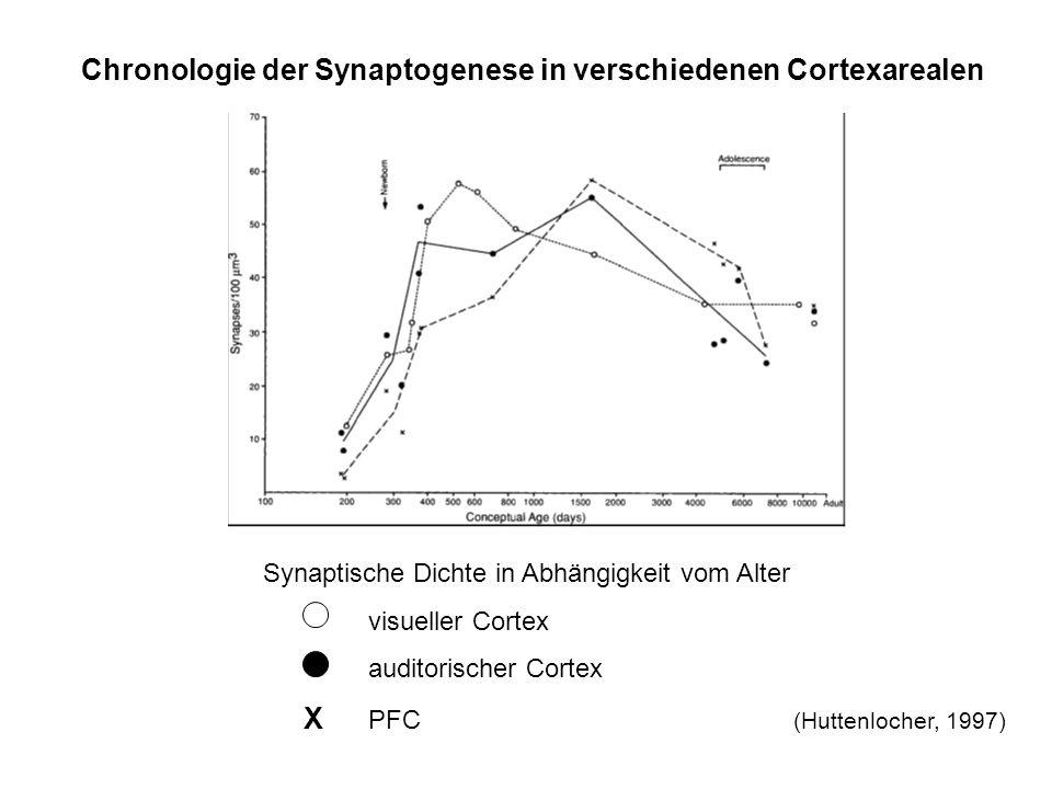 Chronologie der Synaptogenese in verschiedenen Cortexarealen