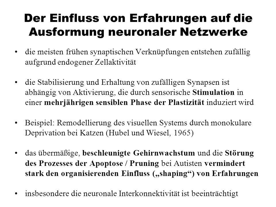 Der Einfluss von Erfahrungen auf die Ausformung neuronaler Netzwerke