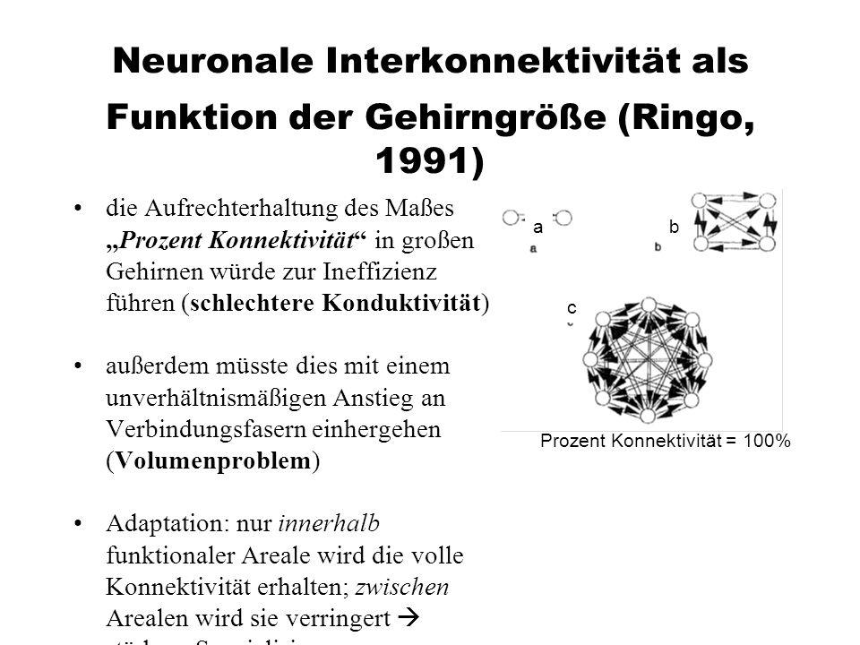 Neuronale Interkonnektivität als Funktion der Gehirngröße (Ringo, 1991)