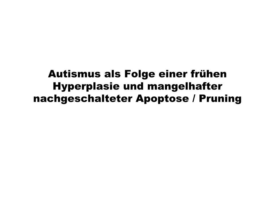 Autismus als Folge einer frühen Hyperplasie und mangelhafter nachgeschalteter Apoptose / Pruning
