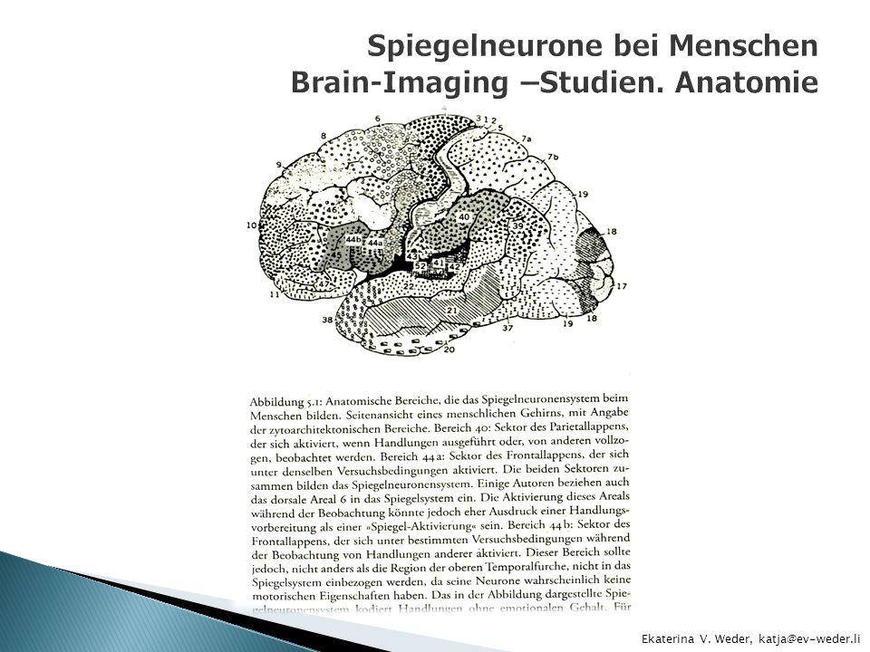 Spiegelneurone bei Menschen Brain-Imaging –Studien. Anatomie