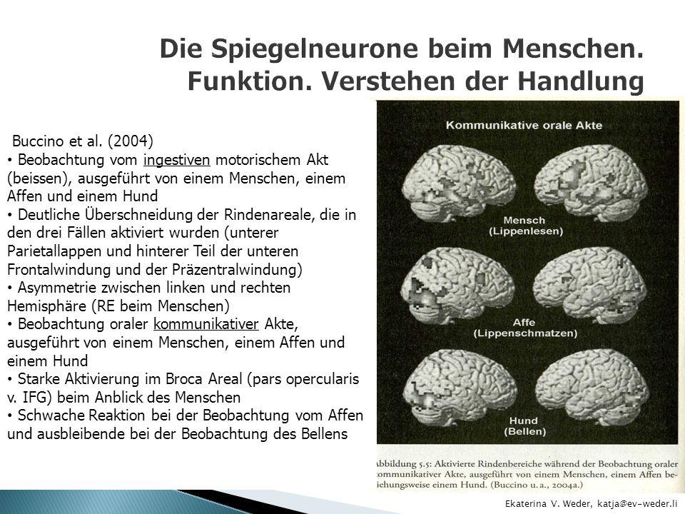 Die Spiegelneurone beim Menschen. Funktion. Verstehen der Handlung