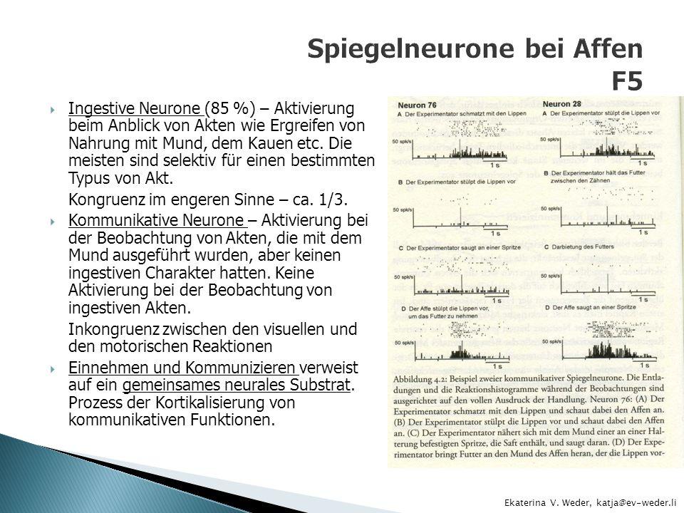 Spiegelneurone bei Affen F5