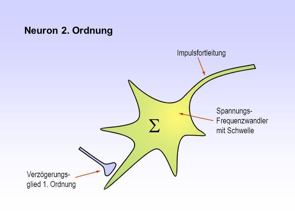 S Neuron 2. Ordnung Impulsfortleitung