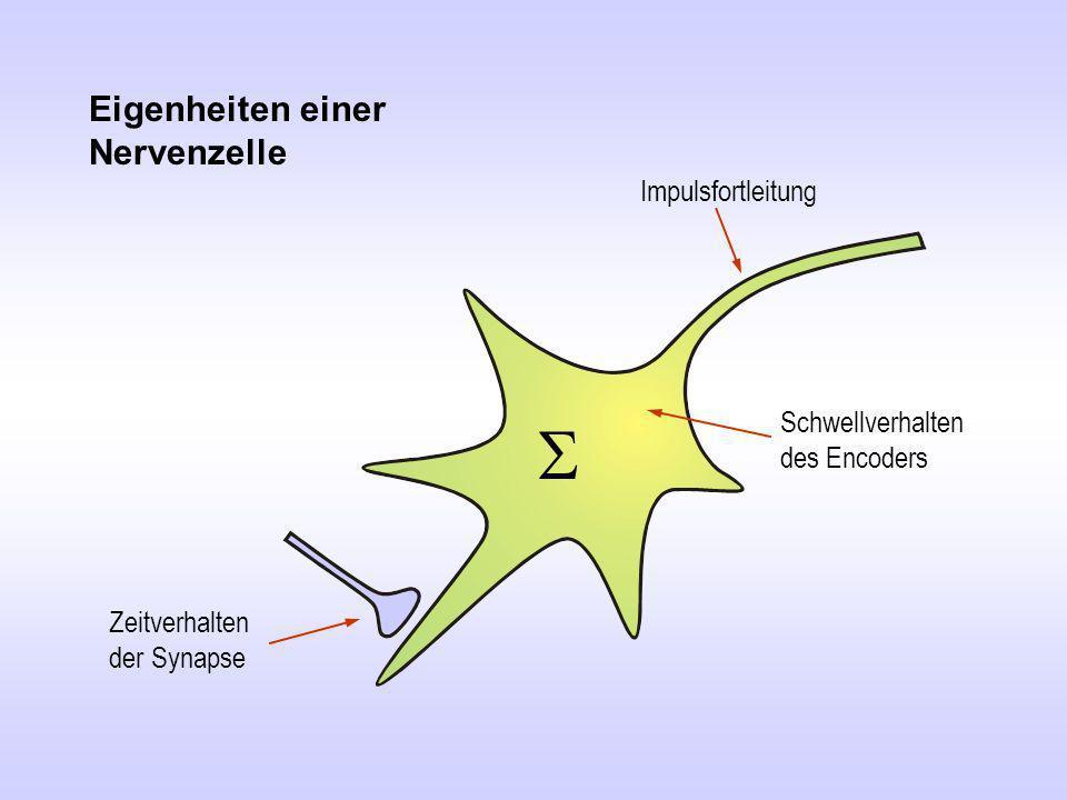 S Eigenheiten einer Nervenzelle Impulsfortleitung