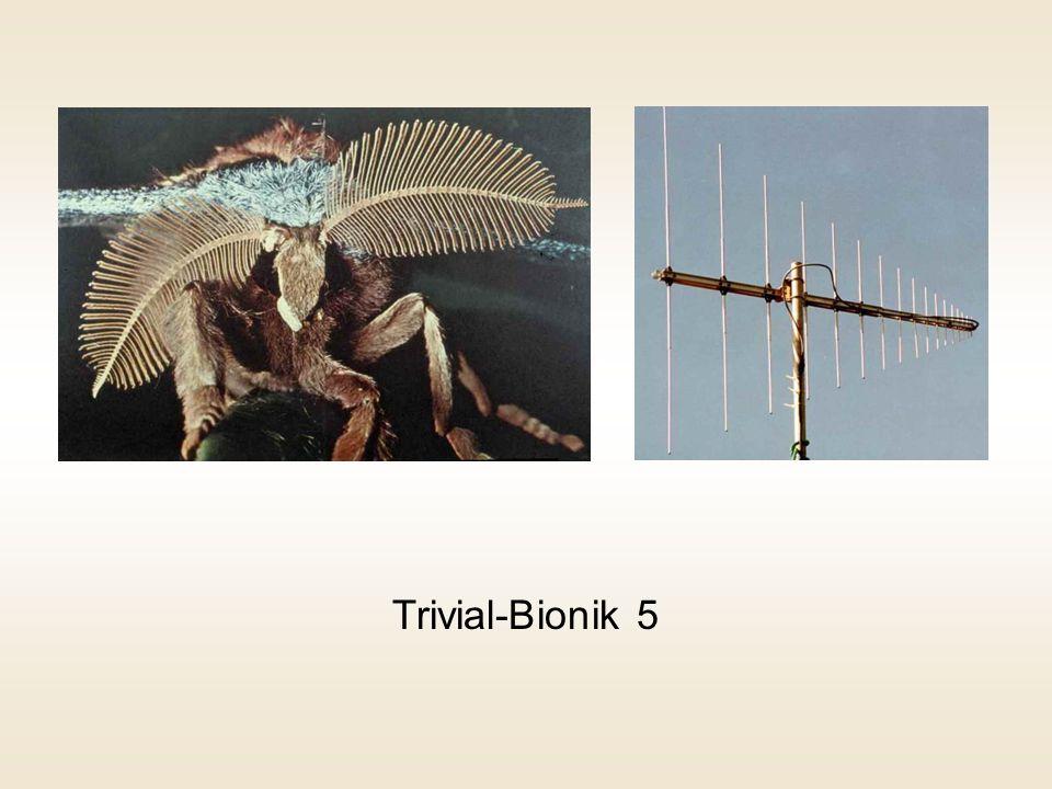 Trivial-Bionik 5