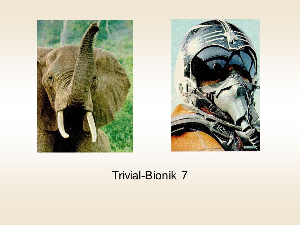 Trivial-Bionik 7