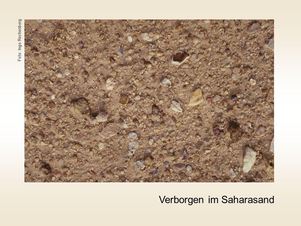 Verborgen im Saharasand