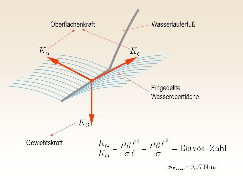 Oberflächenkraft Wasserläuferfuß Eingedellte Wasseroberfläche Gewichtskraft