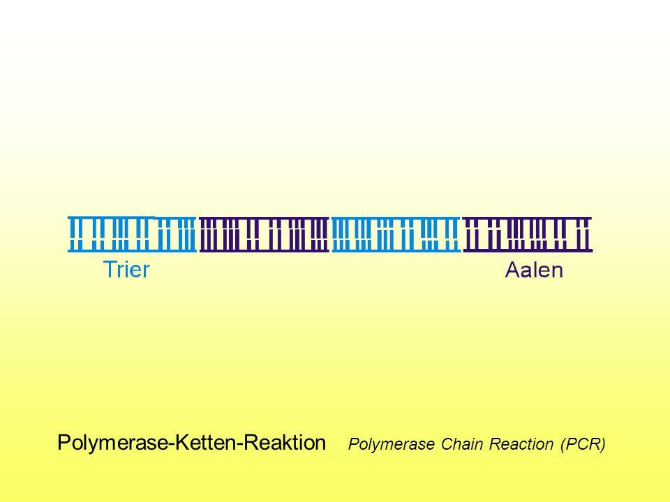 Polymerase-Ketten-Reaktion Polymerase Chain Reaction (PCR)
