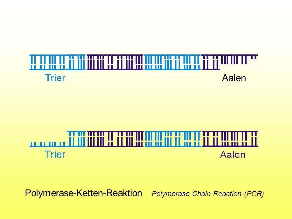 Aalen Polymerase-Ketten-Reaktion Polymerase Chain Reaction (PCR)