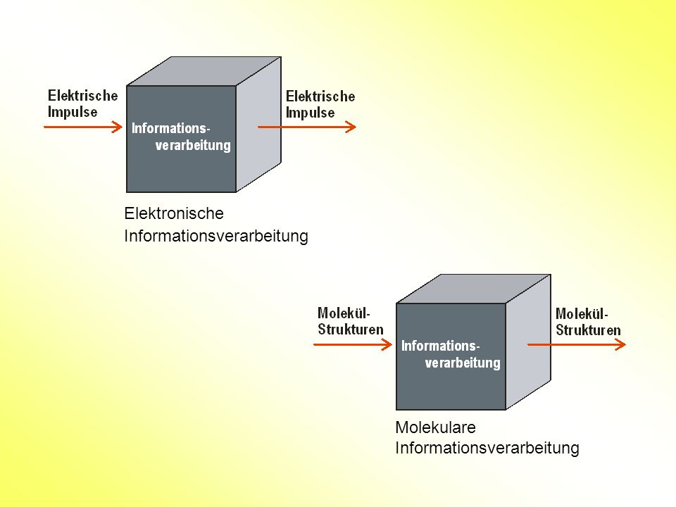 Elektronische Informationsverarbeitung Molekulare Informationsverarbeitung