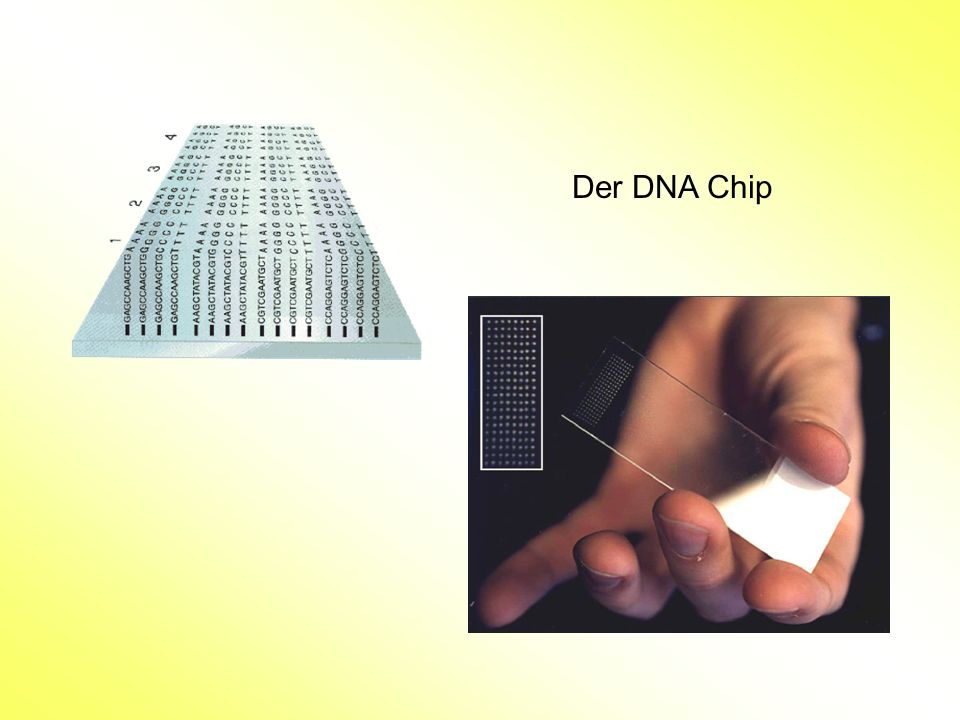 Der DNA Chip