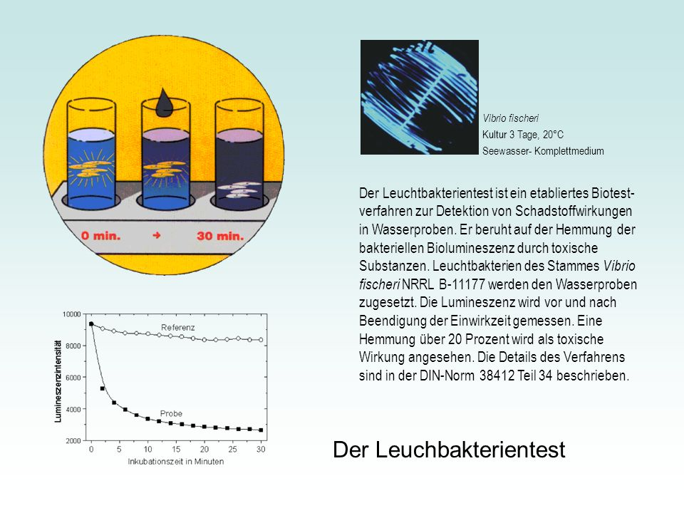 Der Leuchbakterientest