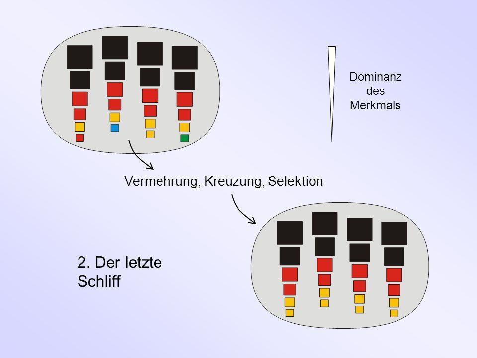2. Der letzte Schliff Vermehrung, Kreuzung, Selektion
