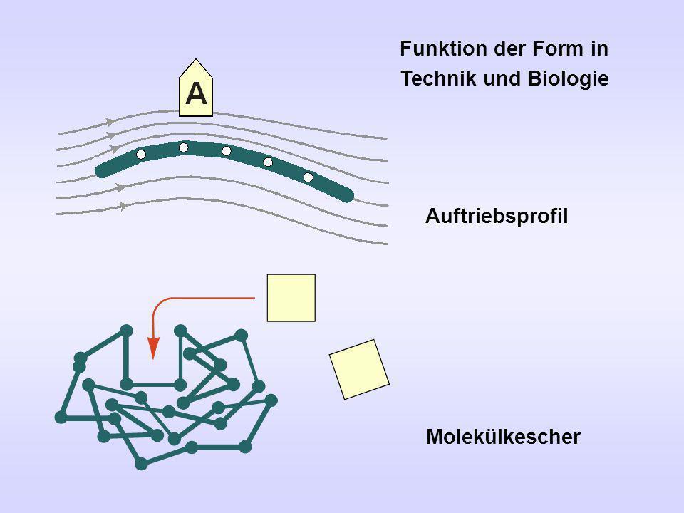Funktion der Form in Technik und Biologie