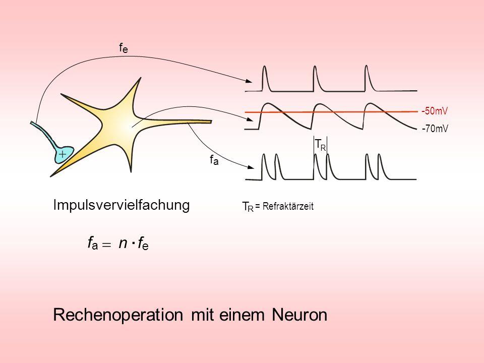 . Rechenoperation mit einem Neuron fa = n fe Impulsvervielfachung fe