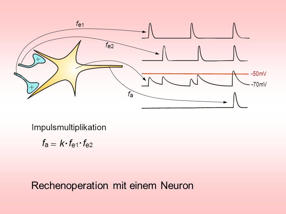 . . Rechenoperation mit einem Neuron fa = k fe1 fe2