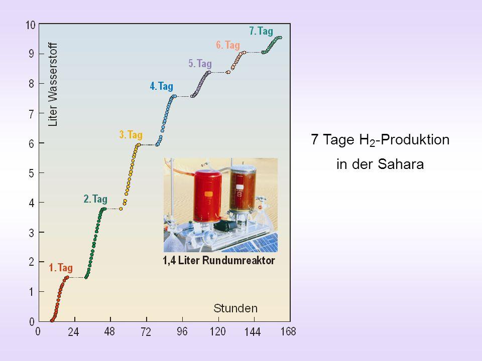 7 Tage H2-Produktion in der Sahara
