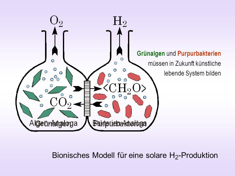 Bionisches Modell für eine solare H2-Produktion