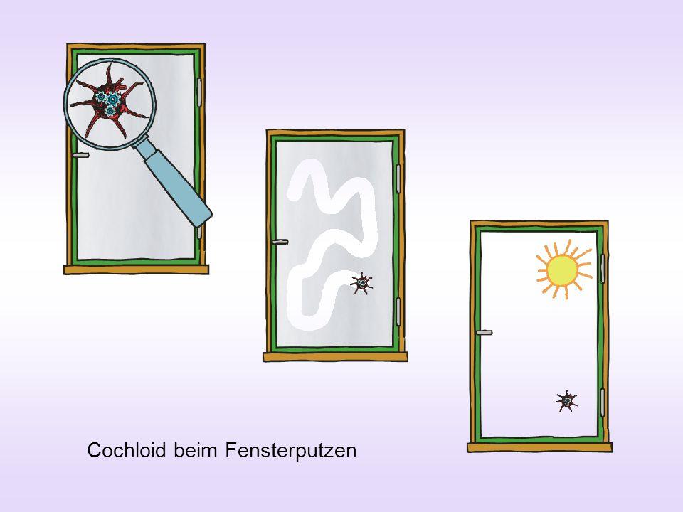 Cochloid beim Fensterputzen