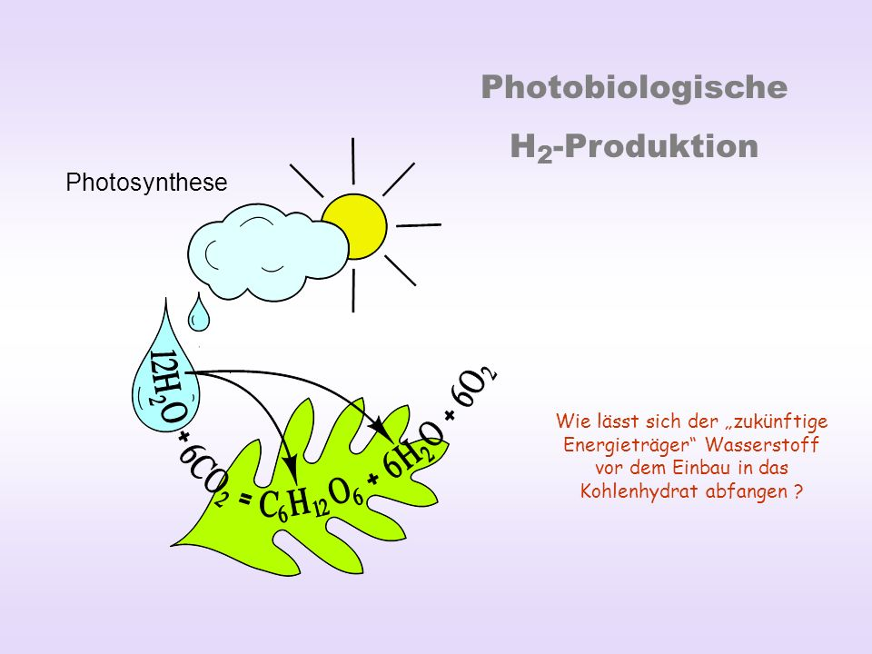 Photobiologische H2-Produktion Photosynthese