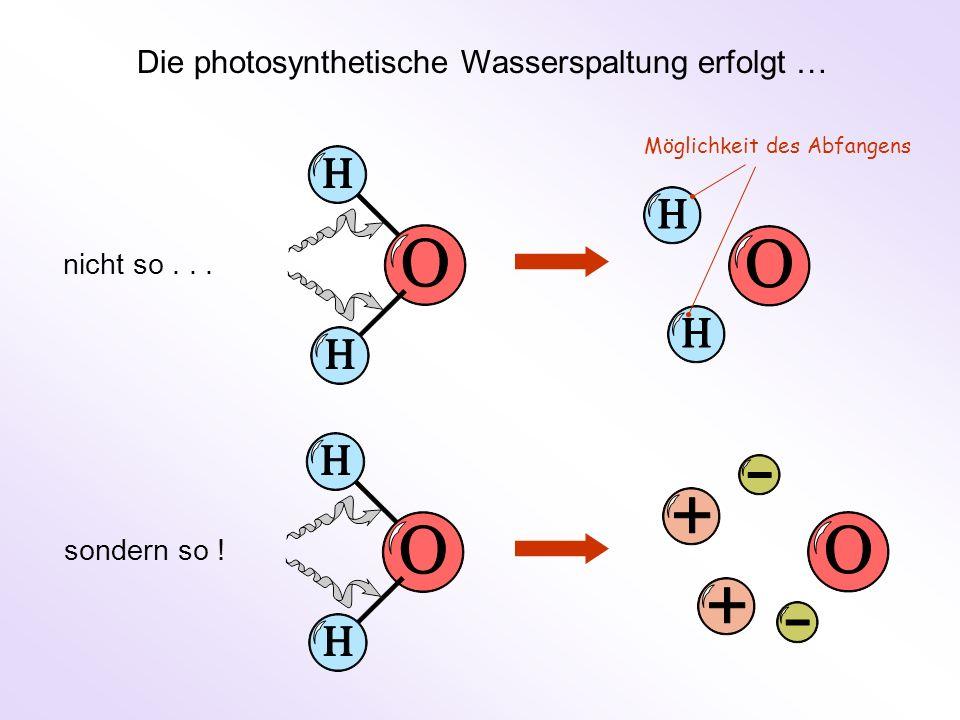 Die photosynthetische Wasserspaltung erfolgt …