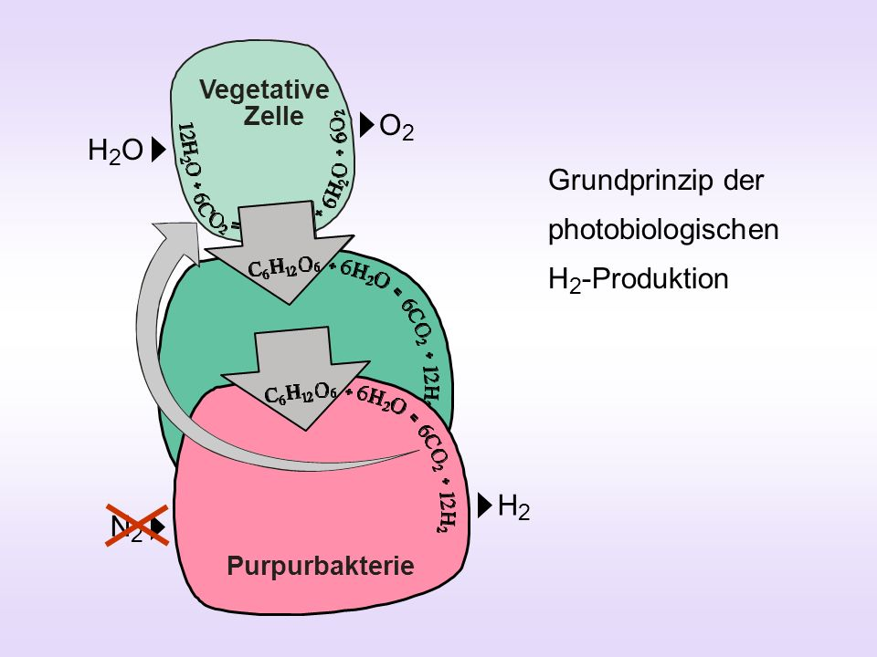 Grundprinzip der photobiologischen H2-Produktion