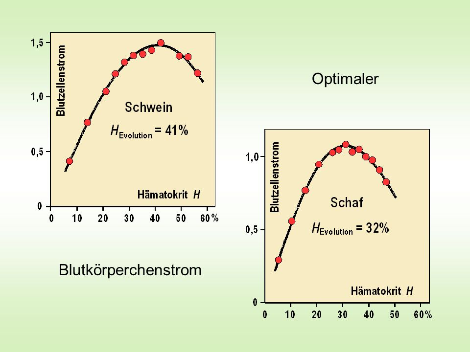 Optimaler Blutkörperchenstrom