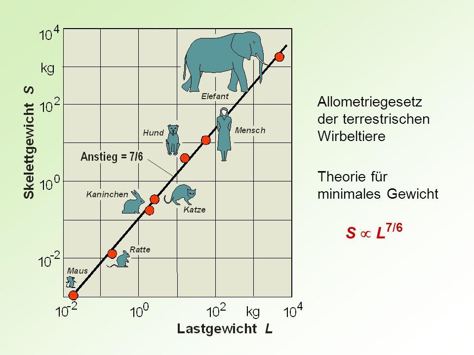 S  L7/6 Allometriegesetz der terrestrischen Wirbeltiere
