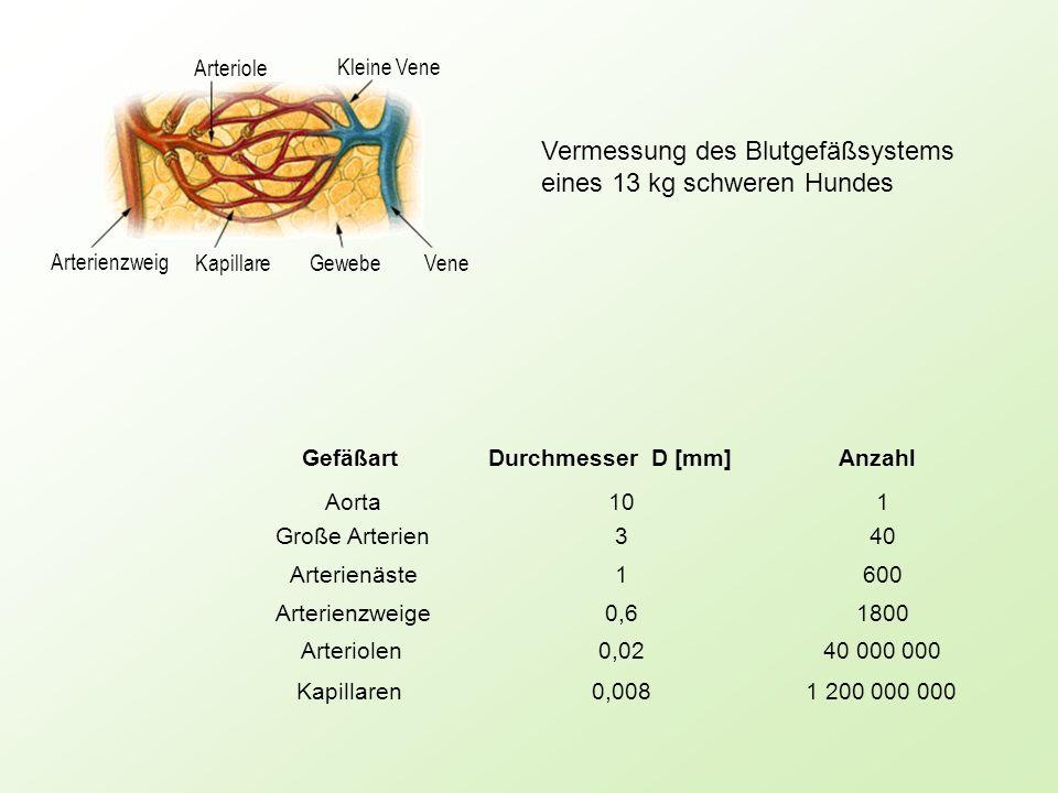 Vermessung des Blutgefäßsystems eines 13 kg schweren Hundes