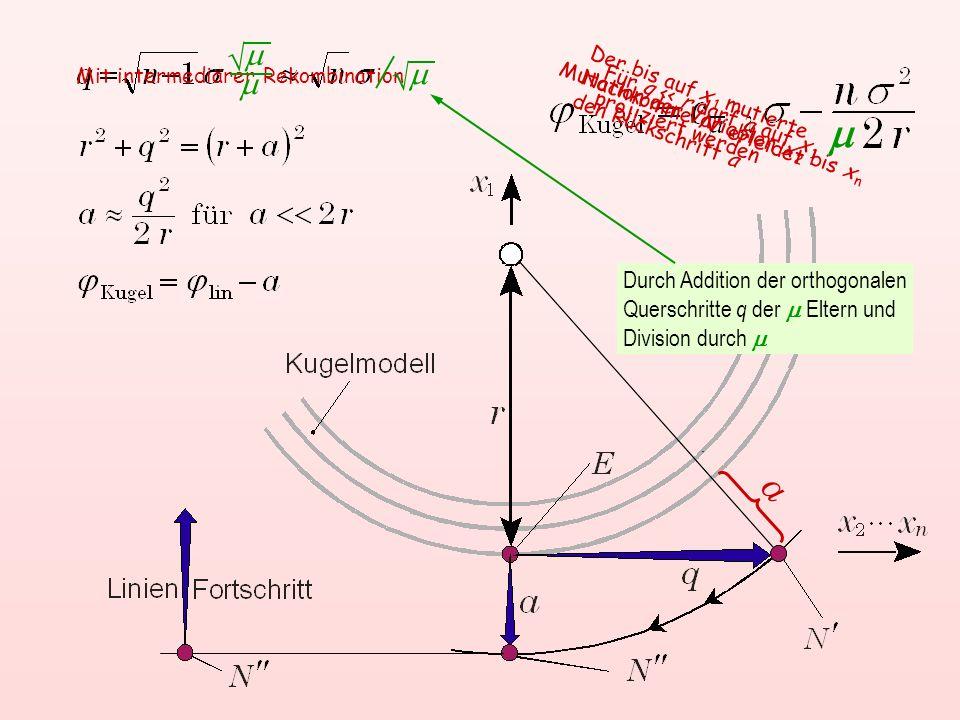 m  m.  Mit intermediärer Rekombination. Der bis auf x 1 mutierte Nachkomme N' erleidet den Rückschritt a.