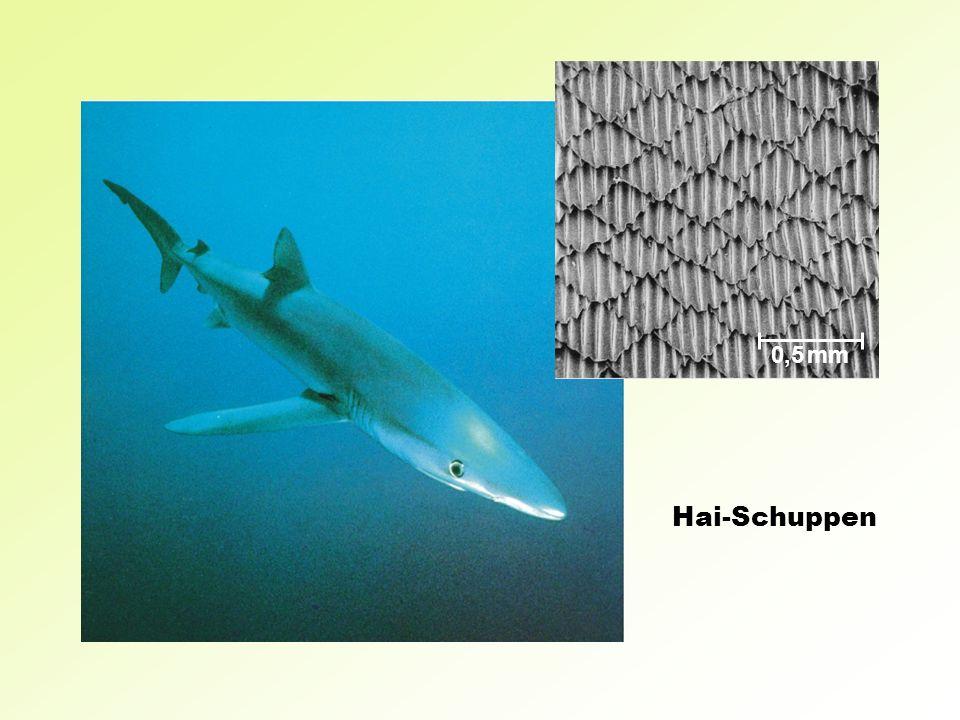 0,5 mm Hai-Schuppen