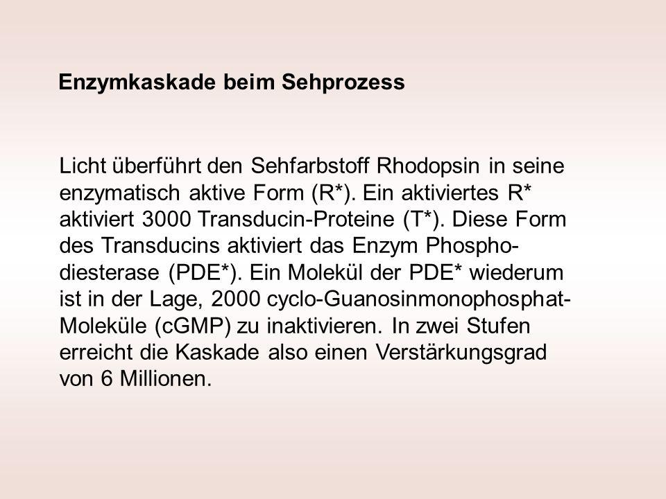 Enzymkaskade beim Sehprozess